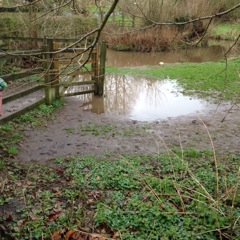 Flooding issue near the pond area